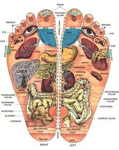 Reflexology. reflex map